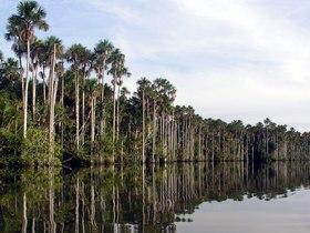 Parque Nacional Bahuaja – Sonene