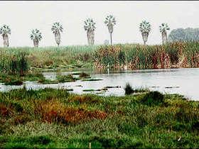 Los Pantanos de Villa