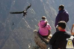 Medium_mirador_la_cruz-colca-arequipa